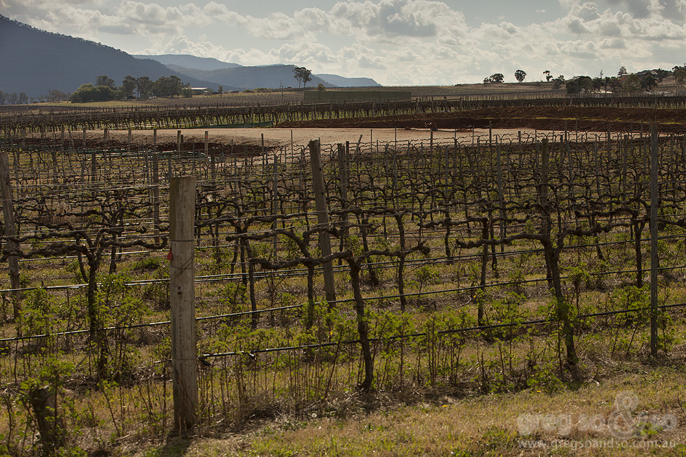 Coal Seam Gas in Vineyards, Fordwich, NSW