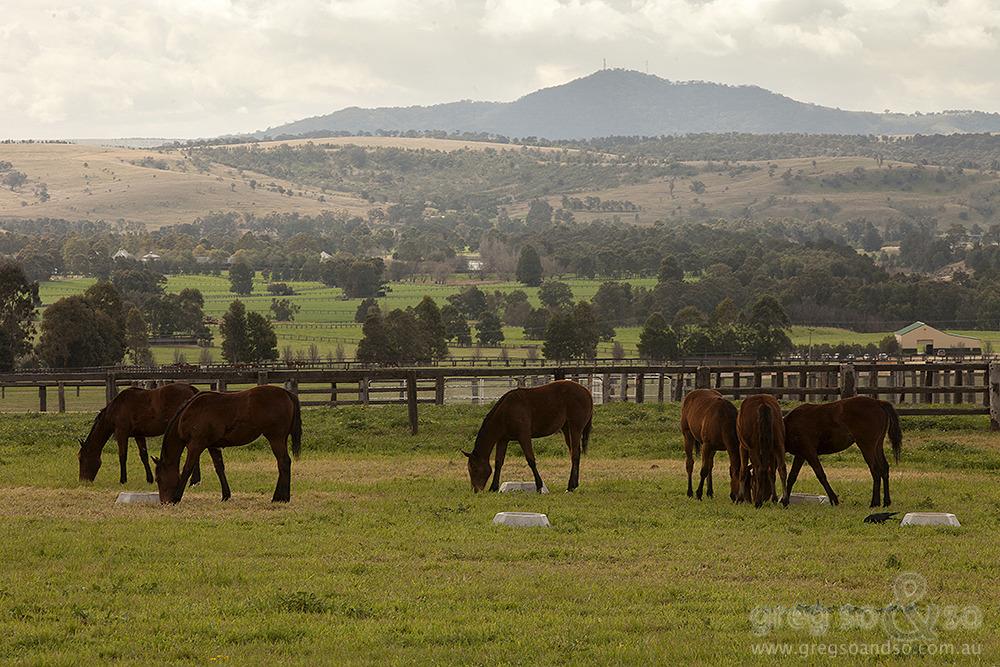 Horse Stud, Denman, NSW