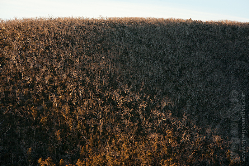 Bushfire Recovery in Namadgi