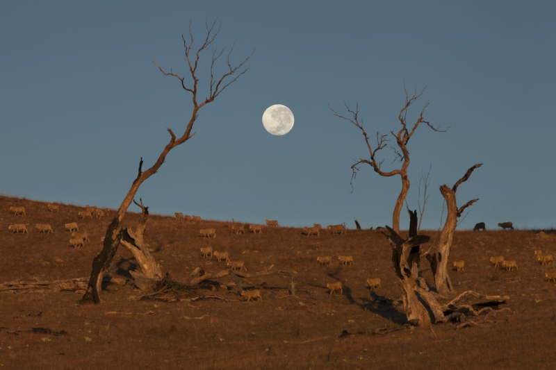 URIARRA MOONRISE.jpg