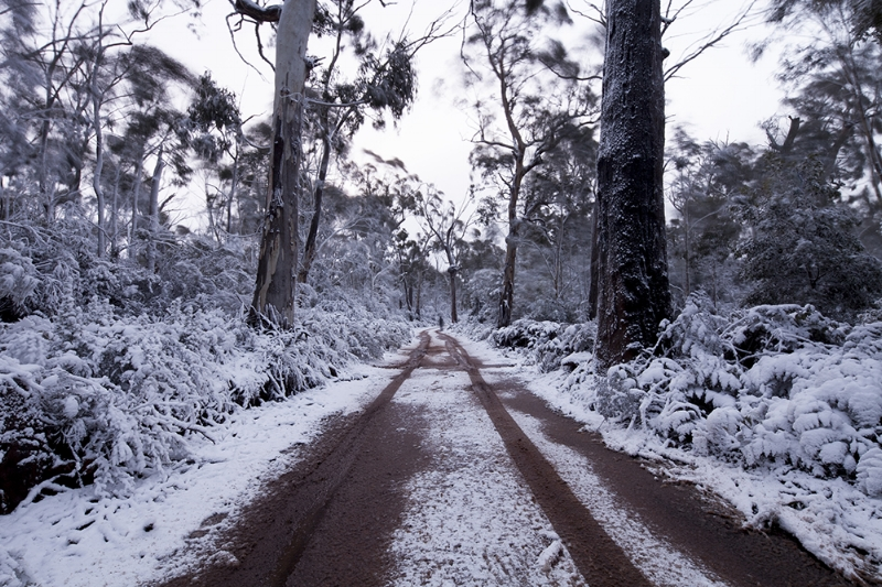 BRINDABELLA SNOW_WEB.jpg