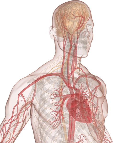mindset-anatomy-2.jpg