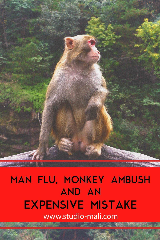 Man Flu, Monkey Ambush And An Expensive Mistake