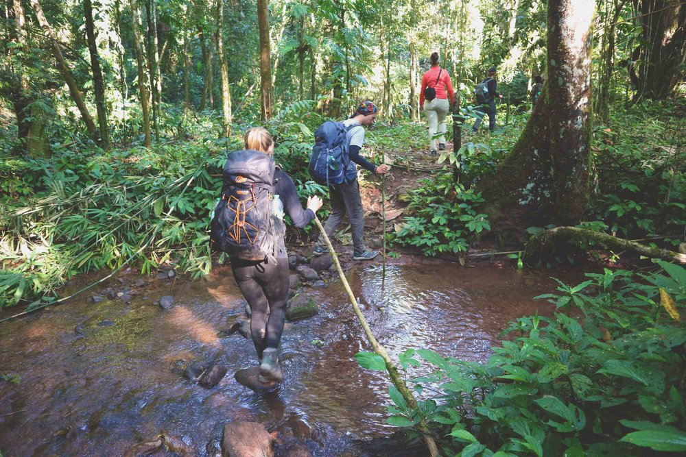 Jungle trekking in the Nam Ha National Park