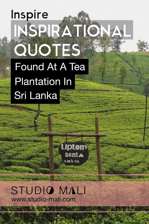Inspirational Quotes Found At A Tea Plantation In Sri Lanka, by Studio Mali