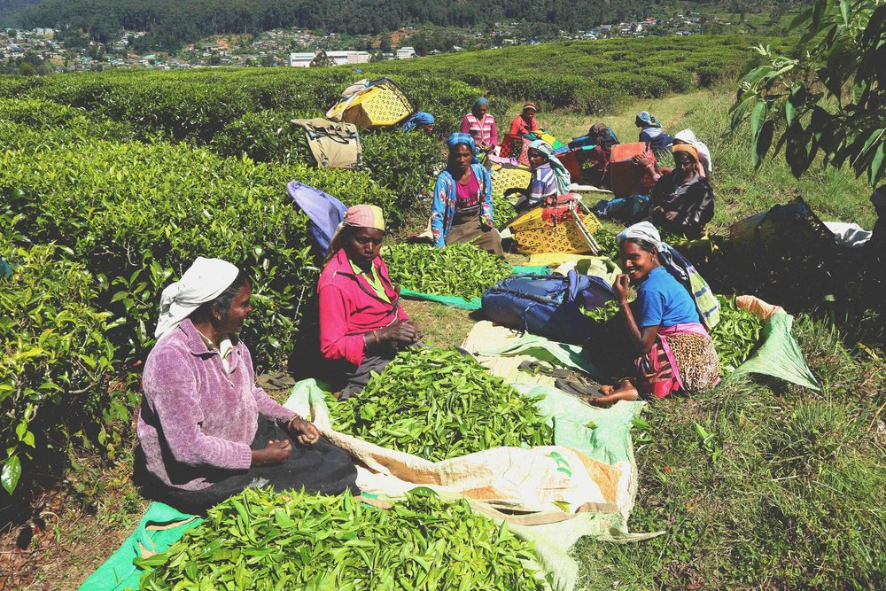 Sadly, one of the tea pickers asked us for money. When working people still beg it's clear that over-tourism has had a negative effect.