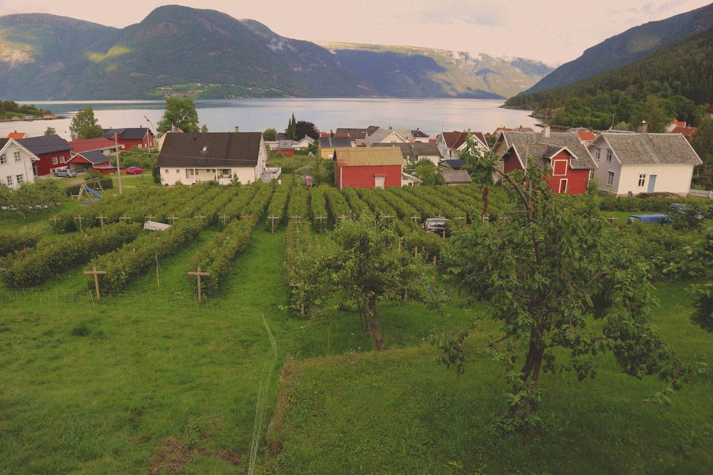 Many Norwegian parents send their children to pick fruit at the Eplet farm in Solvorn (the children seem to really enjoy this time with nature)