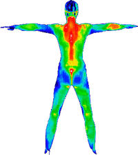 fullbody thermography.png