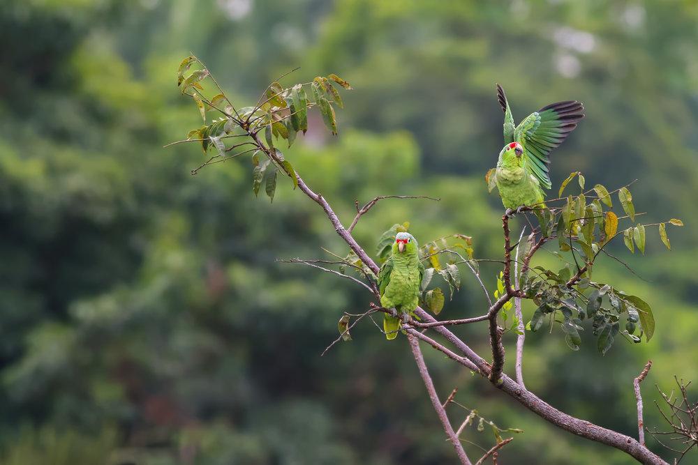 Parrots-JPEG_web 2.jpg