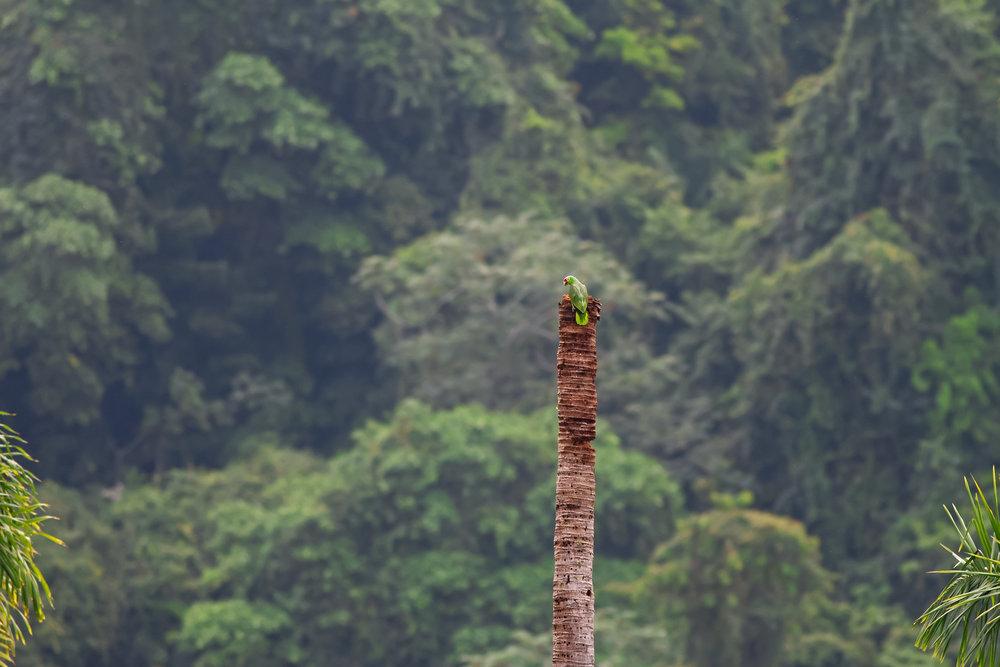 Parrots-JPEG_web 5.jpg