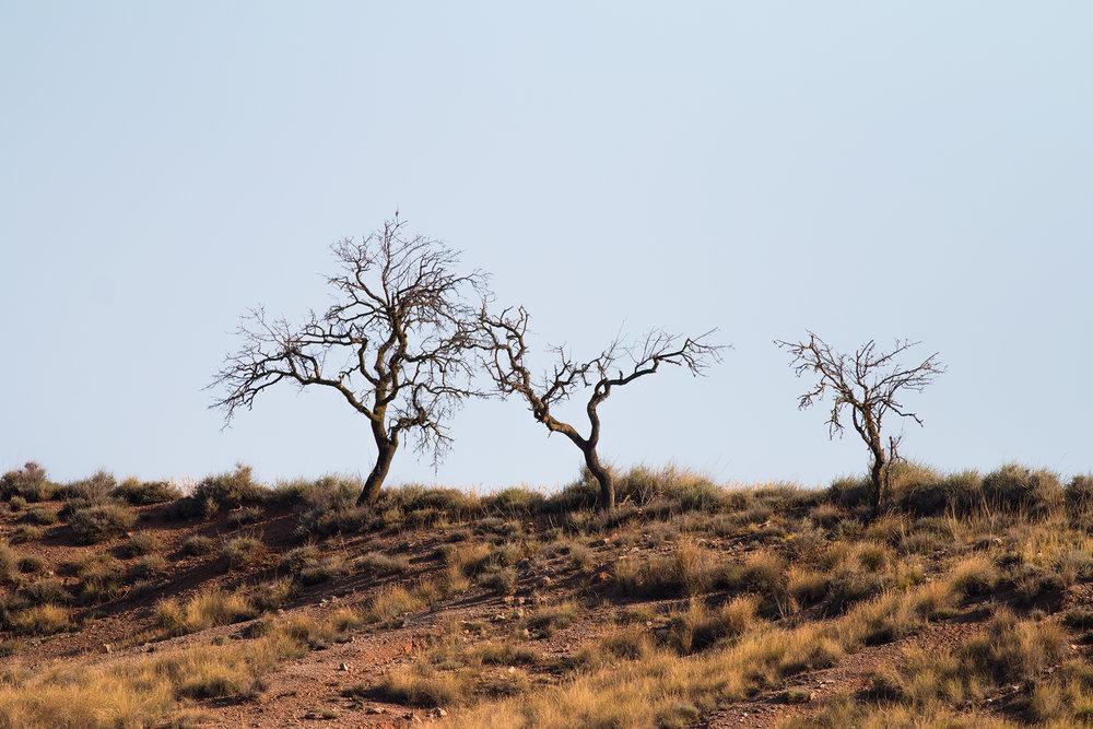 Träd-JPEG_web.jpg