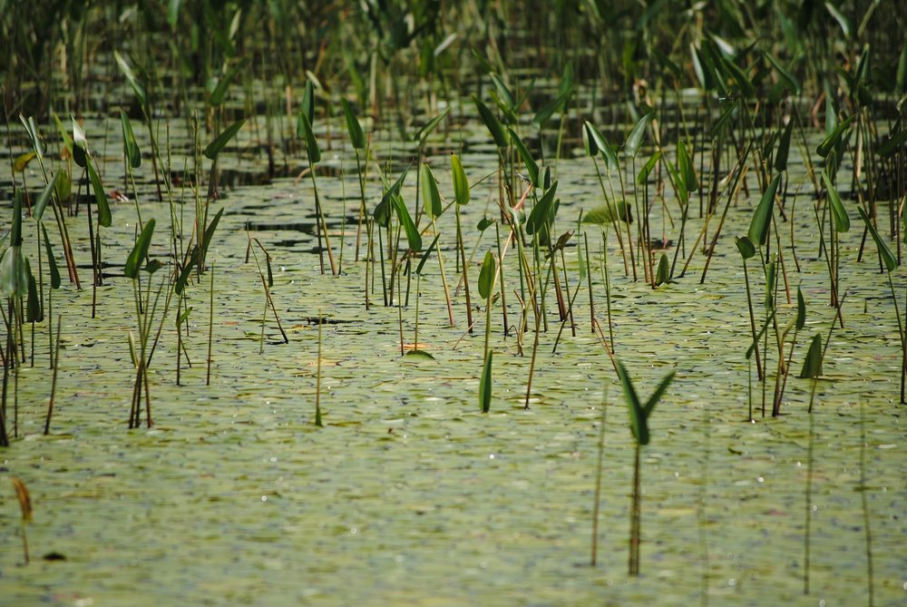 Certain wetlands were considered jurisdictional following the Rapanos case, where there was a significant nexus.