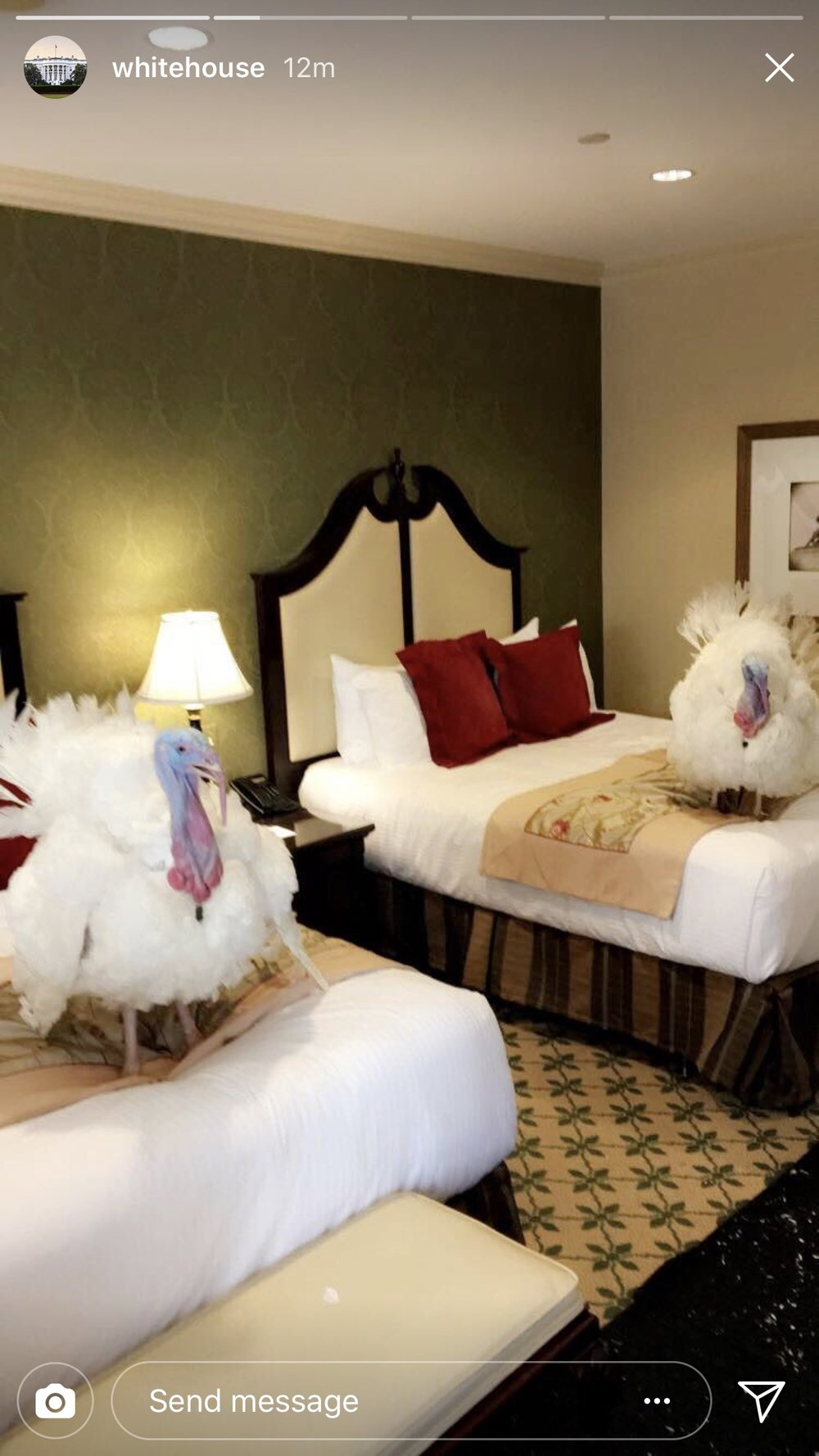 Luxury accommodations for the turkeys at the Willard Intercontinental Hotel. The National Turkey Federation paid the bill for the fancy lodgings as they have in the past.