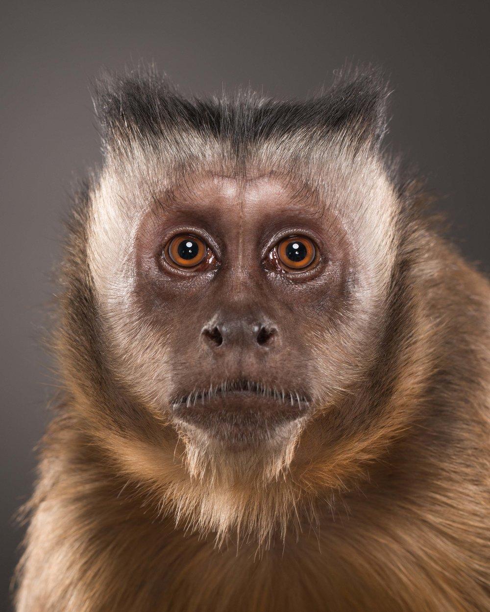 Monkey IV