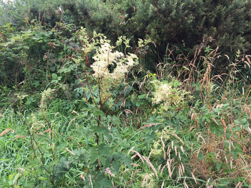 april-danann-meadowsweet.jpg