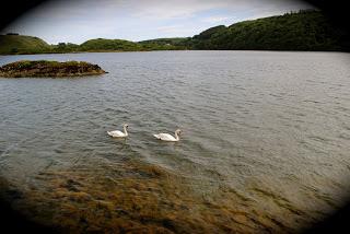 april-danann-Swans in Lough Hyne.jpg