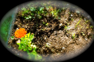april-danann-Marigold .jpg