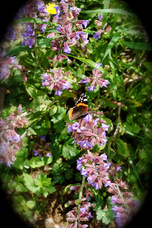 april-danann-Butterfly-garden-sage.jpg