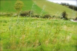 april-danann-Willow-trees.jpg