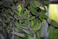 april-danann-Sage-Leaves .jpg