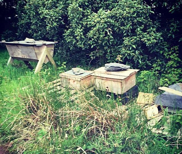 april-danann-Bee-hive.jpg