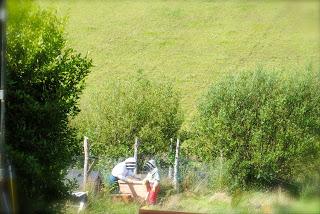 april-danann-Bees-in-suits.jpg