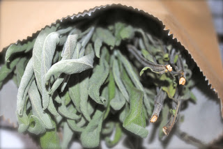 april-danann-Sage-dried .jpg