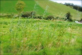 april-danann-Willow-trees-in-garden.jpg