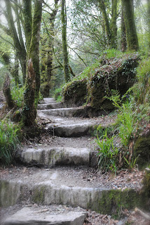 april-danann-Path-Cononaught-Woods .jpg