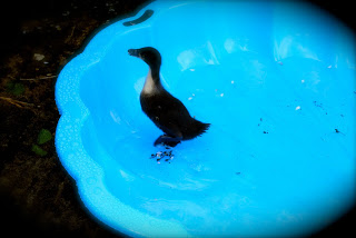april-danann-Baby-Duck.jpg