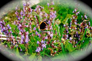 aprill-danann-Butterfly-Garden.jpg