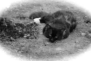 april-danann-Puss-Garden.jpg