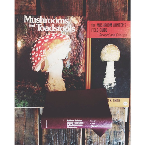 Various Mushroom hunting field guides for the gatherers in us