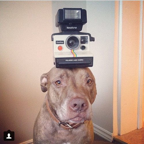 One of our customers on Instagram   @stuffonscoutshead   who's rocking a vintage Polaroid