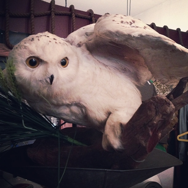Antique taxidermy snowy owl we purchased from a cool stranger.