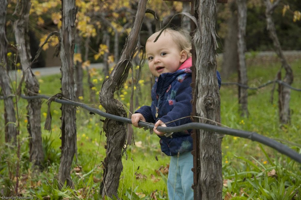 Little M loved the vines...especially the irrigation.