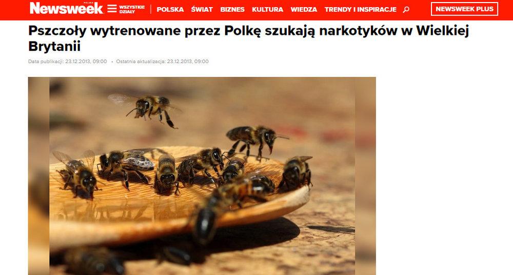 Pszczoły wytrenowane przez Polkę szukają narkotyków w Wielkiej Brytanii - newsweek.pl