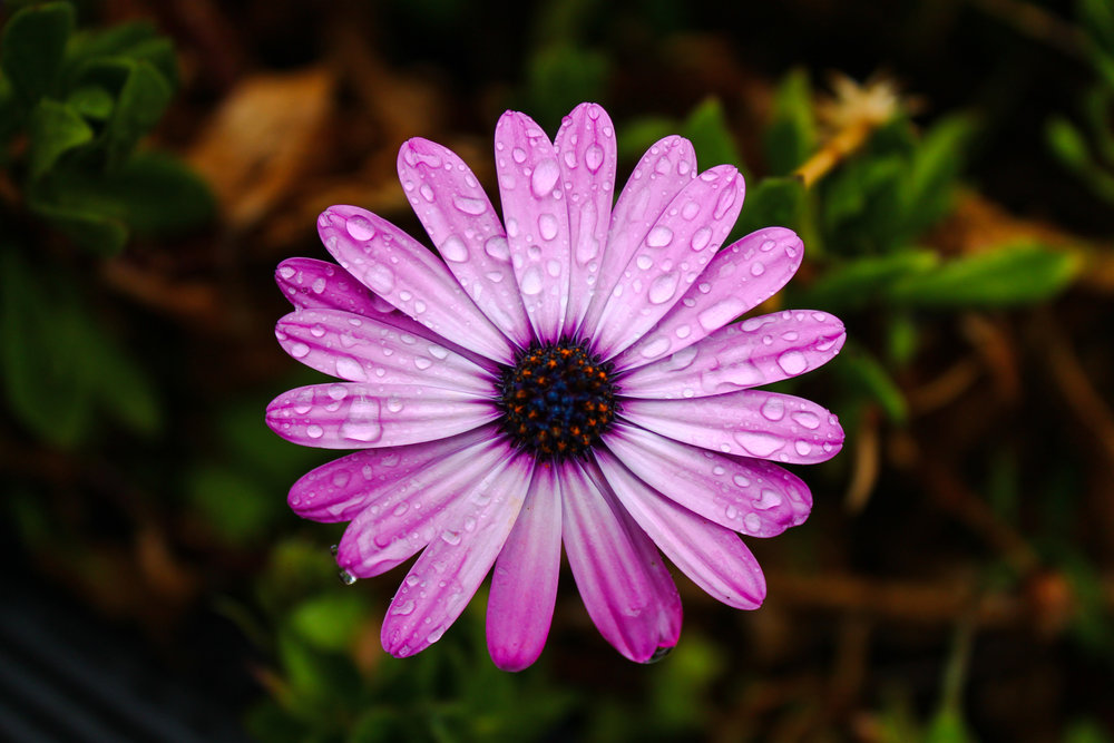 Photographer: Carlos Gayou   Country: -  Title: Purple Daze