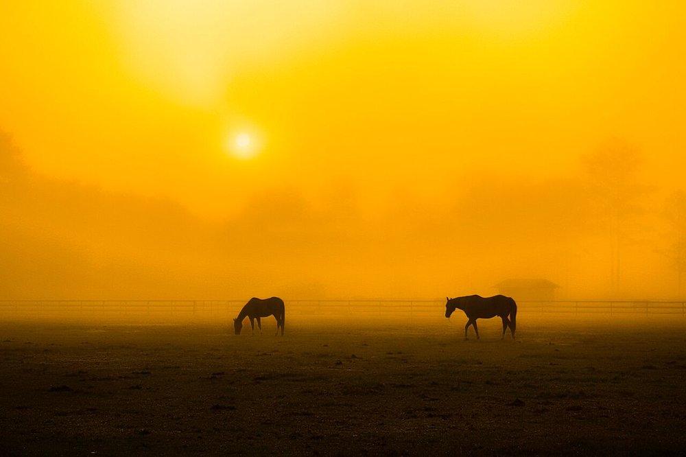 Photographer: Wendy Mogul    Country: USA  Title: Untitled