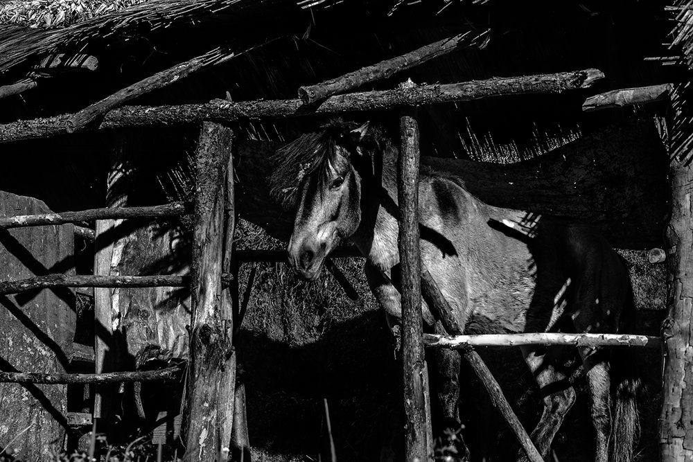 Photographer:  Manabendra Bhattacharjee   Country:  India  Title:  Dark Horse