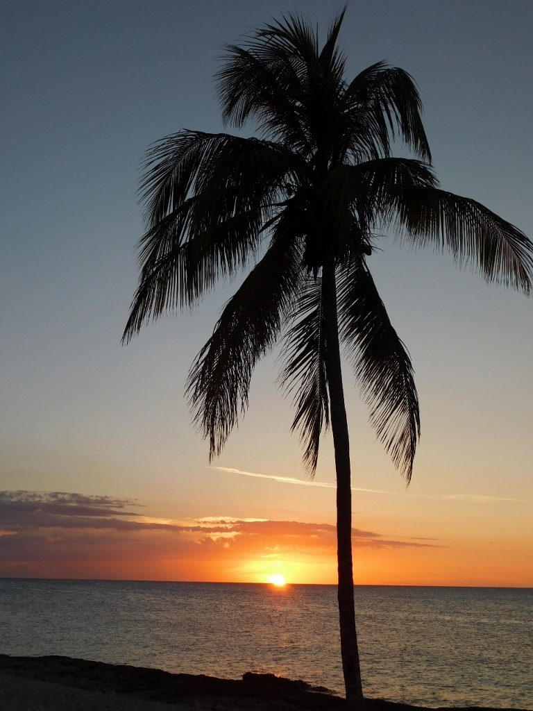 Photographer:  Nathan McMurtrie   Country:  United Kingdom  Title:  Palm tree in the evening sun