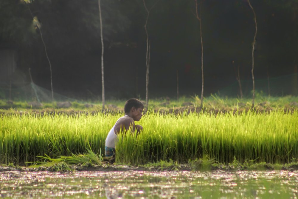Photographer:   Amdad Hossain   Country:    Bangladesh  Title:    It's Golden Hour But Not Golden Time