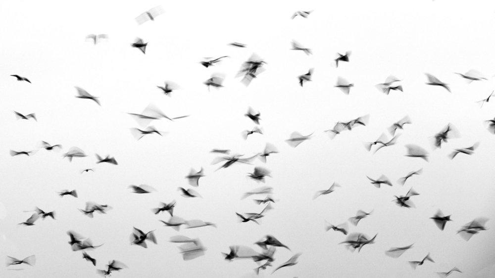 Photographer: Farnaz Damnabi