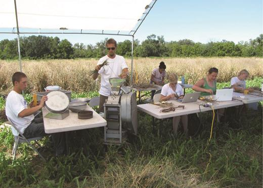 Lee DeHaan, lead scientist with the Land Institute's Intermediate Wheatgrass Program, with interns and graduate students, collecting data and hand threshing Kernza perennial grain. Photograph: The Land Institute.