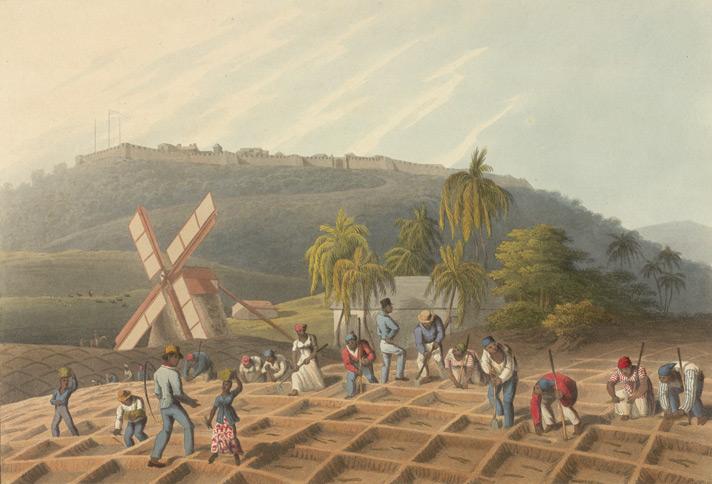 Sugarcane plantation, 1800's