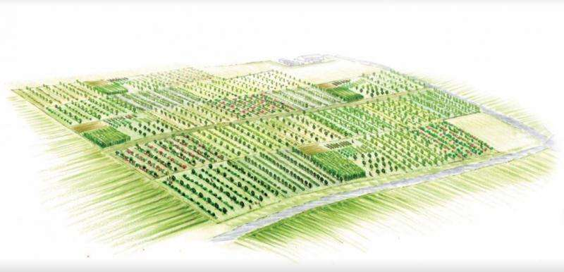 Schematic of multifunctional woody polyculture plots. Credit: University of Illinois