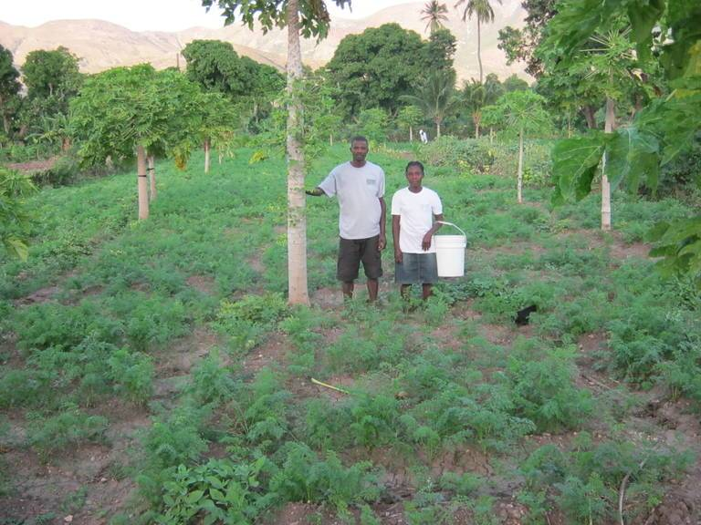 An SFA agroforestry project near Gonaives, Haiti  Image credit:  SFA