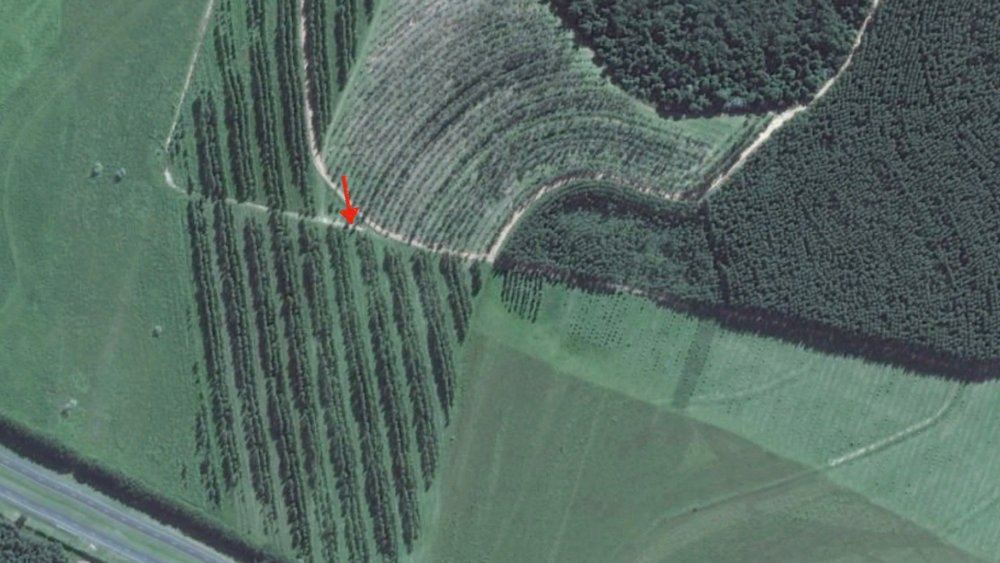 The triple rows of trees, pictured above. The dark green block to the right is a eucalyptus plantation, and the curved rows at center are pictured below.