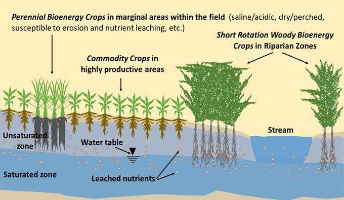 Concepts of integrated landscape management for bioenergy crops in an agricultural setting. Source: Cacho et al. 2017. Credit: Cacho et al. 2017.