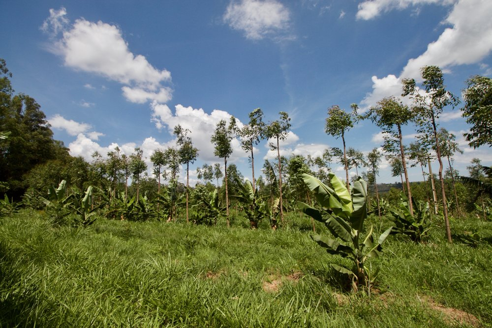 Agroforestry in Brazil (Photo by Propagate Ventures)